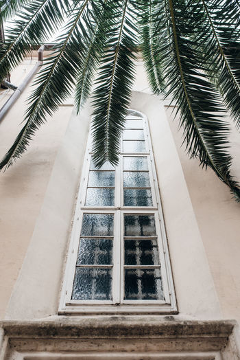 Low Angle View Of Palm Trees By Building