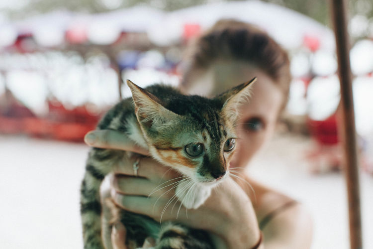 Animal Themes Close-up Day Domestic Animals Domestic Cat Feline Focus On Foreground Indoors  Lifestyles Looking At Camera Mammal One Animal One Person People Pets Portrait Real People Young Adult
