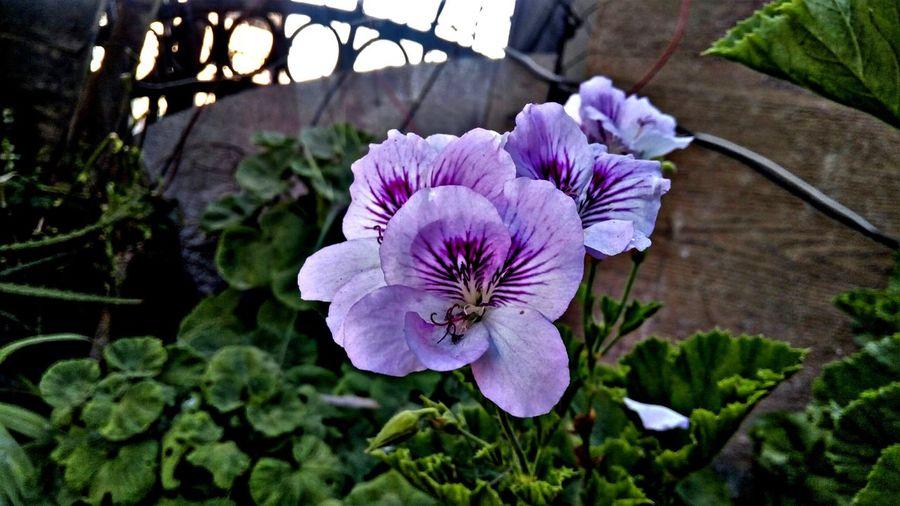 Flores Flores, Bosques Y Naturaleza. Naturalesa🌳🍃