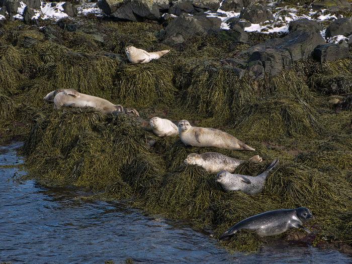 Several seals