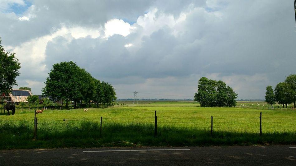 Landscape Landscape_photography Holland The Netherlands Nature Nature Photography Meadow Meadows Clouds Clouds And Sky Cloudporn Horses Dutch Landscape Dutch Countyside