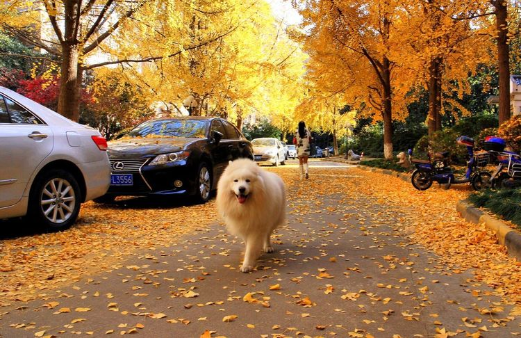 Autumn Dog Change Car Tree Pets Leaf