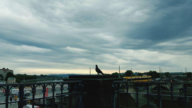 Was für ein Himmel über Dresden!