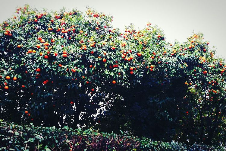 Oranger 🍊 First Eyeem Photo