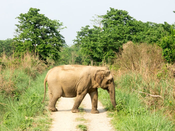 African Elephant Animal Themes Animal Trunk Animal Wildlife Animals In The Wild Day Elephant Full Length Grass Growth Landscape Mammal Nature No People One Animal Outdoors Safari Animals Side View Sky Standing Tree Tusk Walking