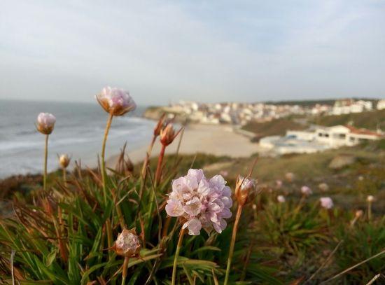 Beach Relaxing Sea Flower Nofilter Clouds Sky Water