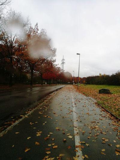 Rainiy Day Tree Autumn Road Sky Cloud - Sky