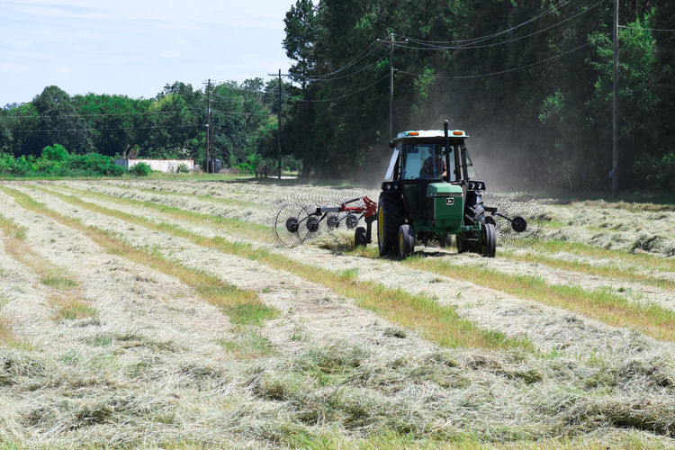 Putting Hay In