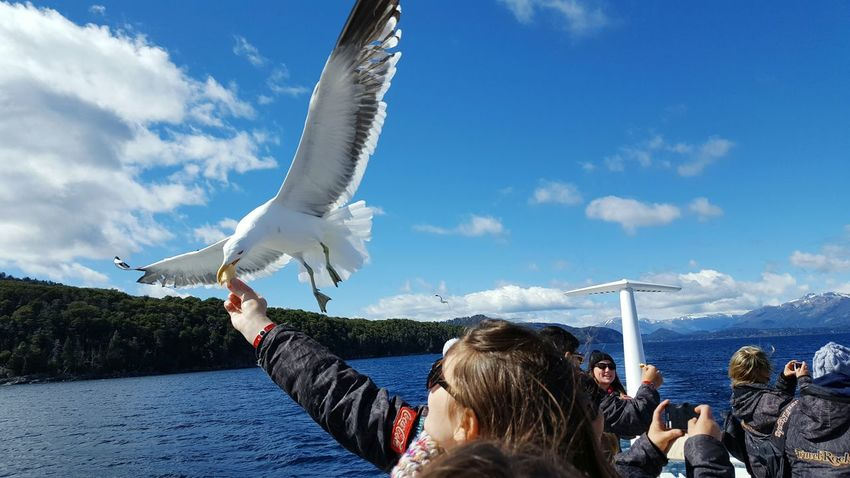 Always Be Cozy Vacations Blue Sky Sea Flying Bird Photography Bariloche, Argentina Egresados2016
