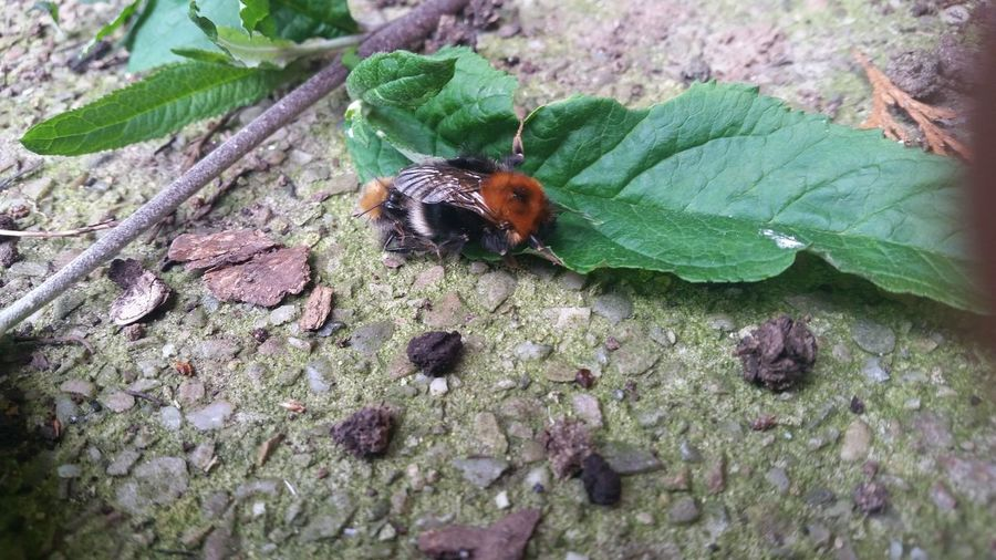 Bee Mating Check This Out In Garden drtbyshire