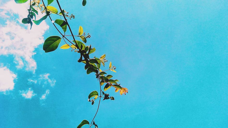 Minimalism Minimalobsession Minimal Minimalist Minimalistic Minimalist Photography  In My Point Of View Blue Blue Sky Sky Clouds And Sky A Dash Of Green Albay,bicol Philippines