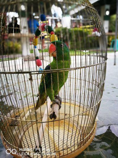 Bird's View First Eyeem Photo