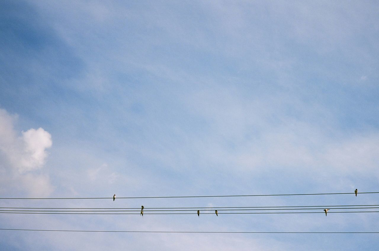 Birds Perching On Power Lines Against Blue Sky