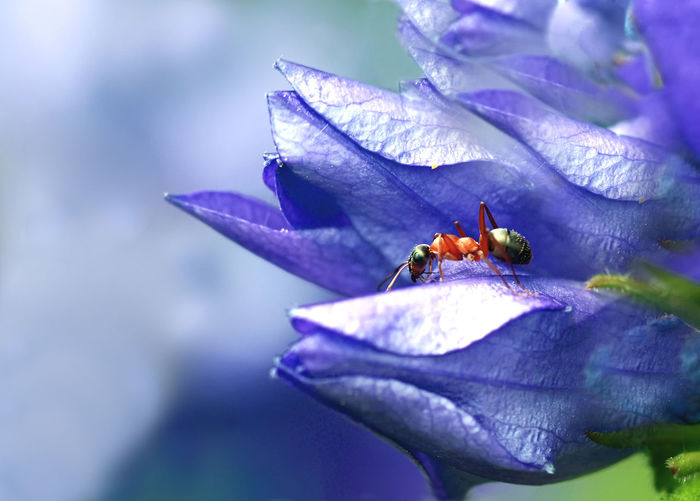 Best Shots Nature Macro Photography Ameise Animal Themes Animal Wildlife Animals In The Wild Ant Beauty In Nature Blooming Close-up Day Flower Flower Head Fragility Freshness Insect Leaf Macro Nature No People One Animal Outdoors Plant Purple Small Ant
