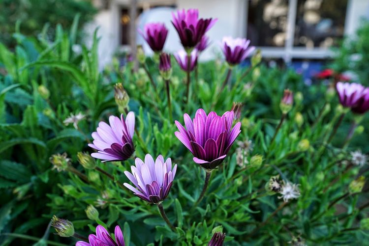 Morocco Photos Flowerpark Garden Day Relaxing Flower Purple Nature Flower Head Plant Fragility Petal Pink Color Beauty In Nature Freshness Focus On Foreground Growth Close-up Outdoors No People Eastern Purple Coneflower Botanical Garden Crocus Streamzoofamily