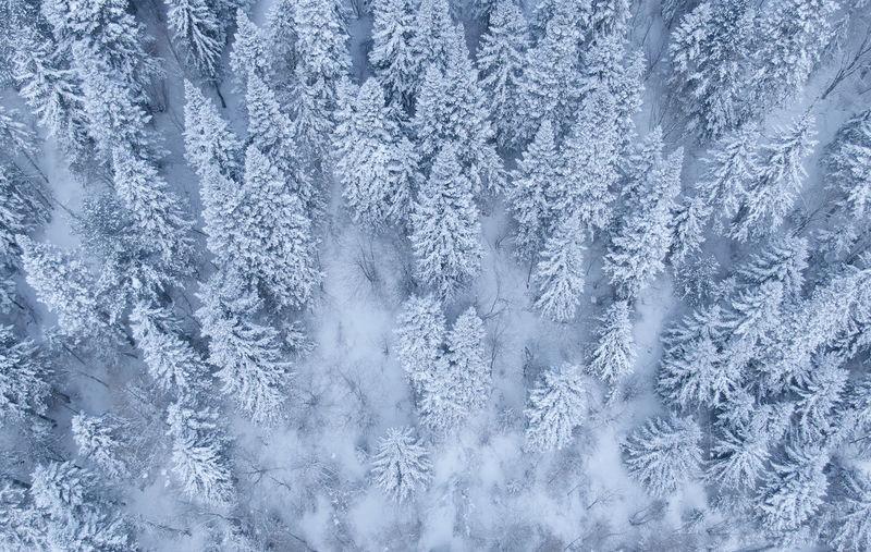 Full frame shot of forest during winter