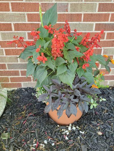 Flowering plants against brick wall