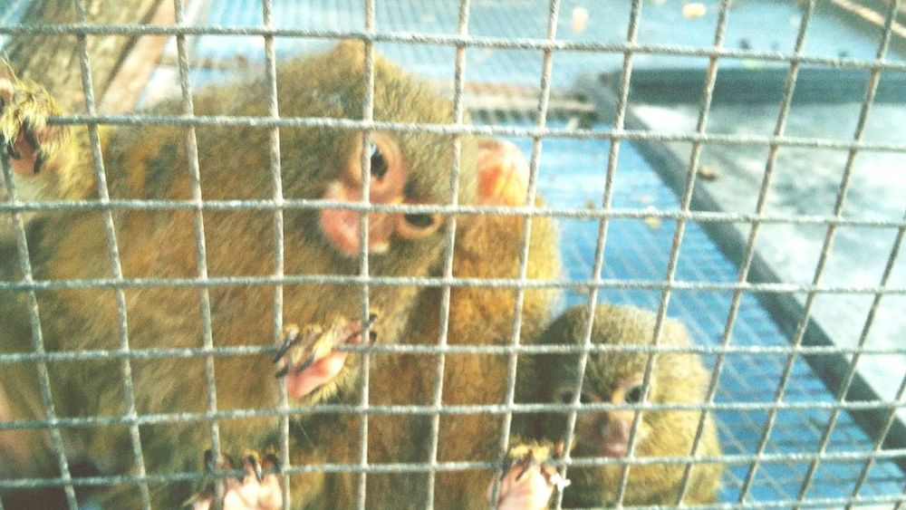 I wanna take this cute little animallll. Cuteanimals Cutieanimals Animal Animals