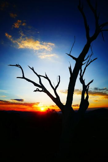 Sunset Tree Sky Nature Silhouette Branch Outdoors No People Welcome To Black EyeEmNewHere Cloud - Sky Low Angle View Australian Landscape Silhouette Origional Photo Backgrounds Colours In The Sky Colours Of Nature Tree Australia Full Frame This Is Where I Live Australian Bush Art Is Everywhere The Great Outdoors - 2017 EyeEm Awards Perspectives On Nature Postcode Postcards