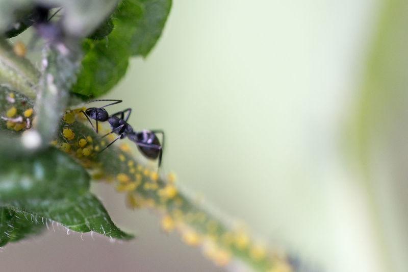 Ant–fungus