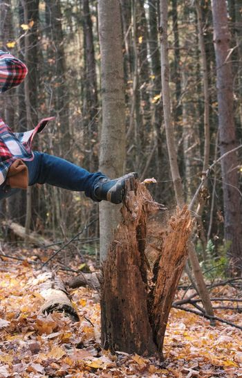 Low section of person kicking tree trunk at forest