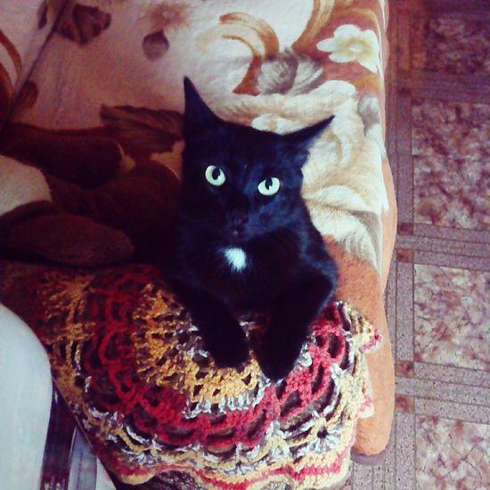 Domestic Cat No People Animal