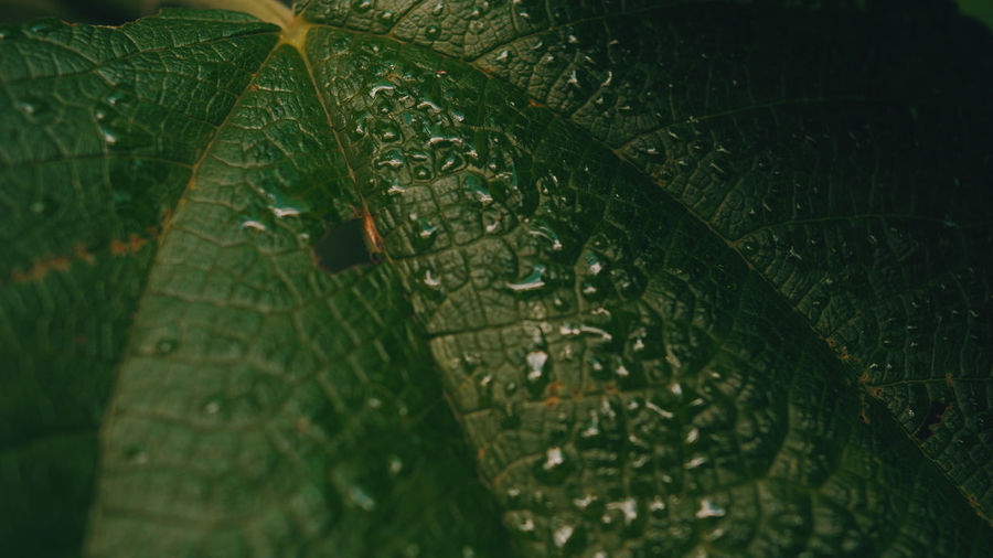 Full frame shot of wet leaf