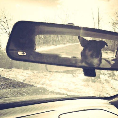 Chubbz Backseat