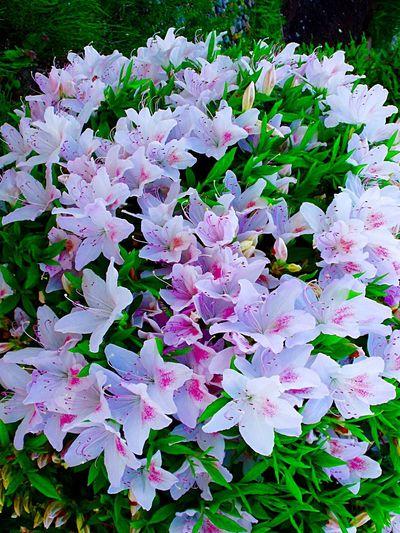 EyeEm Flower Flower Photography Flower Collection Relaxing Taking Photos Enjoying Life Hello World Morning Walk Warking♡ EyeEm Best Shots White Flower Japan Photography