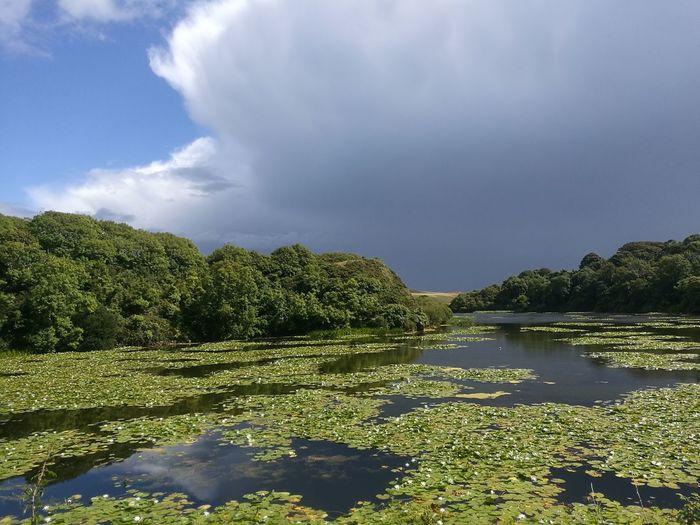 Water Lillies Ponds Sky And Clouds Sun & Rain Warm Peaceful