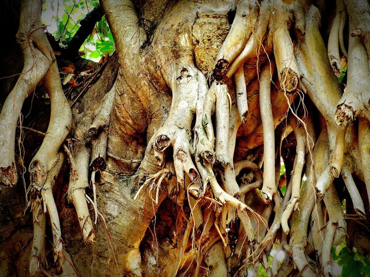 Tree Branches Trees Tree Trunk Tree_collection  Photography Nature At Its Best Best  My Picture 2016 EyeEm Best Shots Tree Art Tree Bark Showing Imperfection Trees Collection Colorful Hello World Colorfull Click Best On EyeEm Nature New On Eyeem Beautiful Hi World Tree Photo