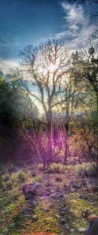 Supertree Sunspots Nature Awesome_nature_shots