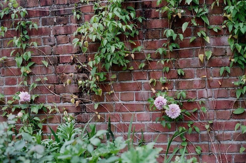 Plant Brick