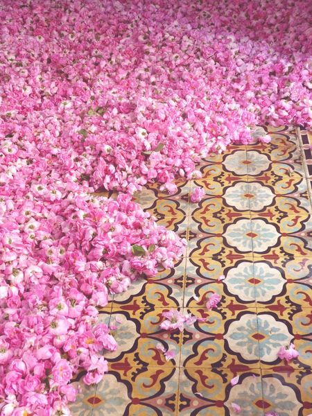 Tunisia Nabeul Roses Pink