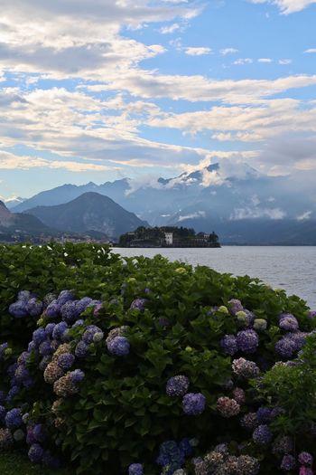 Stresa Italia Lake Maggie Summer Travel Flower Beauty In Nature Beautiful