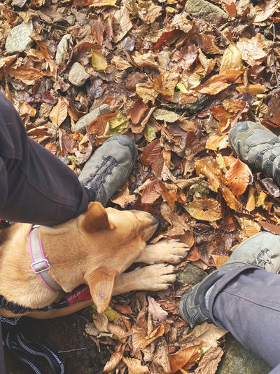 Midsection of person with dog during autumn leaves
