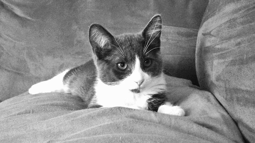 B&w KiMartinez Photography Relaxing Kitty
