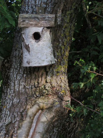 Tree Trunk Tree Day Outdoors No People Forest Growth Nature Close-up Bird House Wood On Wood