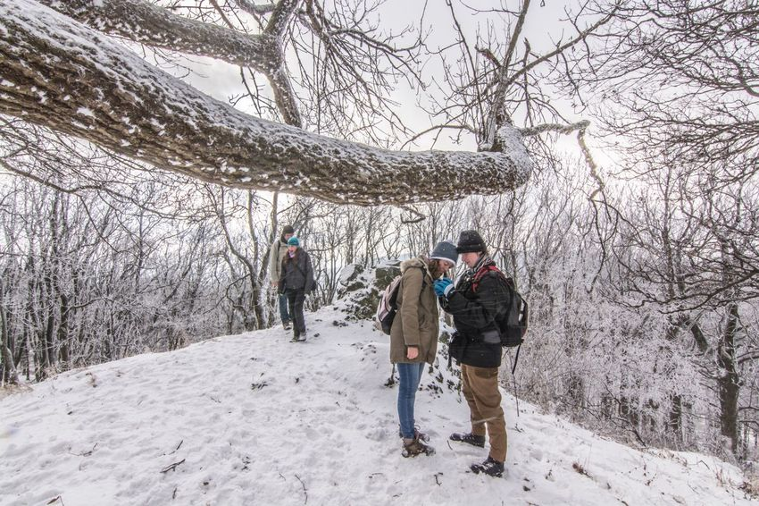 Winter Snow Bare Tree Cold Temperature Tree Rear View Weather Nature Beauty In Nature Lifestyles Hiking Branch Walking Warm Clothing Leisure Activity Full Length Outdoors Borzsony Kéktúra Hungary Scenics Real People