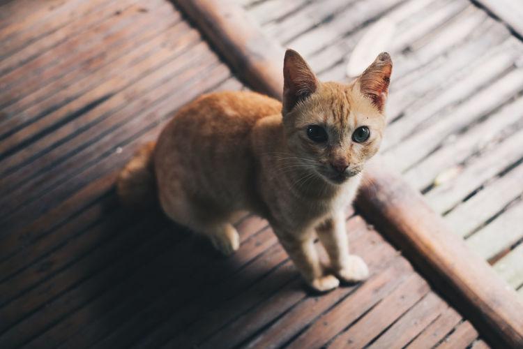 Portrait of kitten on wood