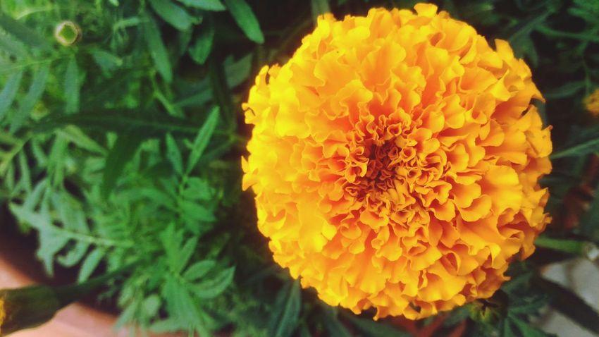 Flower Karahindiba Summer Summertime Gaziantep Türkiye Turkey Life Outdoors Summer ☀ Flowers, Nature And Beauty Nature