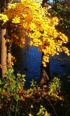 Beauty In Nature Water Nature Change Outdoors Tree Yellow Leaf Looking Around ♥ Autumn Colors And Textures Of Nature