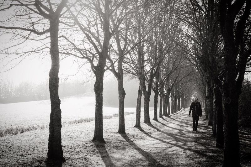 Rear view of man walking on bare trees
