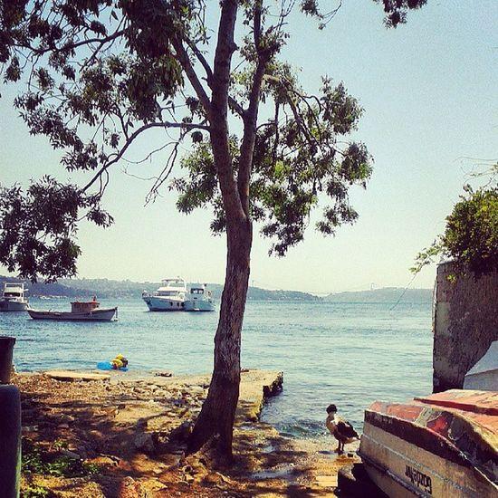 Denize burada girilir :) Sun Summer Sea Yaliköy beykoz
