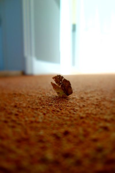 Dry Leaf Standing Solitary Carpet Low Angle View Indoors  Mobilephotography Selective Focus Blurry On Purpose Afternoon Light Sunlight On The Floor Little Things Brown Close-up