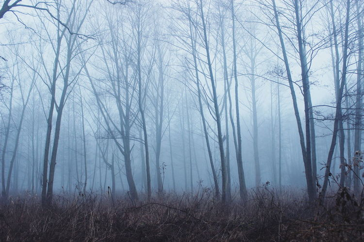 Bare Trees In Forest During Foggy Weather