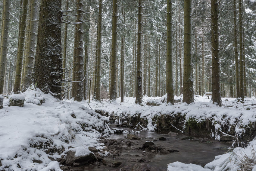 Winter im Nationalpark Hunsrück-Hochwald Beauty In Nature Cold Temperature Day Forest Landscape Long Exposure Nature No People Outdoors Scenics Sky Snow Tranquil Scene Tranquility Tree Tree Trunk Water Winter