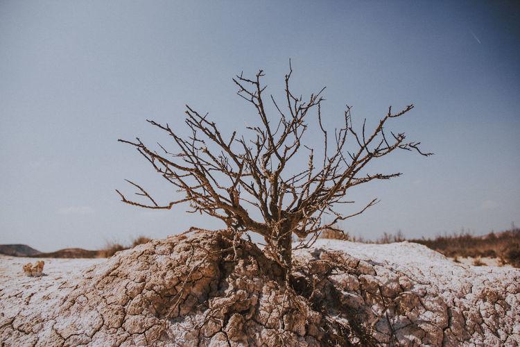 Bare tree on land against sky