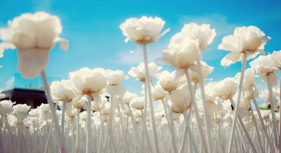 Low angle view of flowers in field against sky