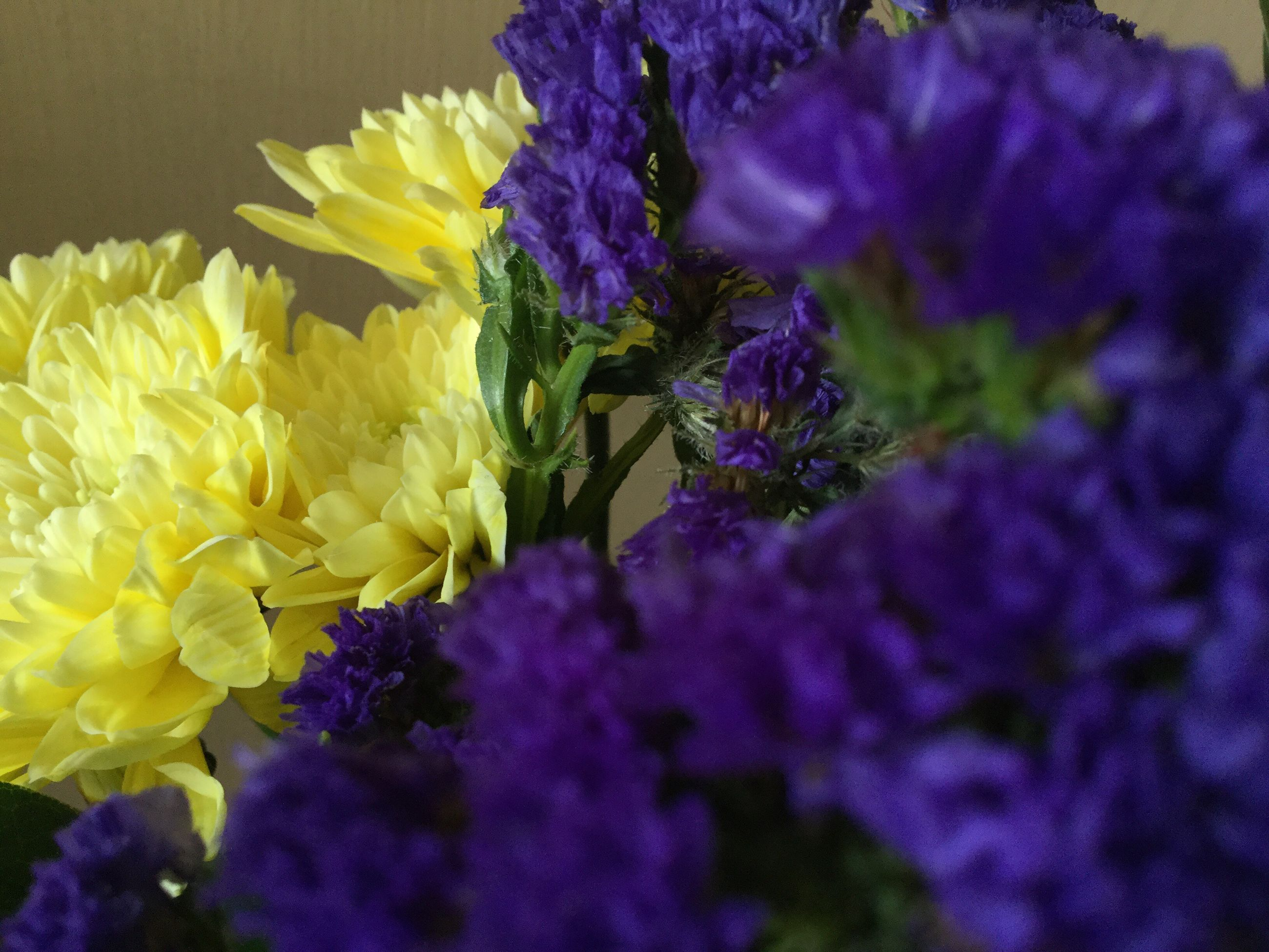 flower, purple, fragility, beauty in nature, freshness, nature, growth, petal, flower head, plant, no people, close-up, day, outdoors
